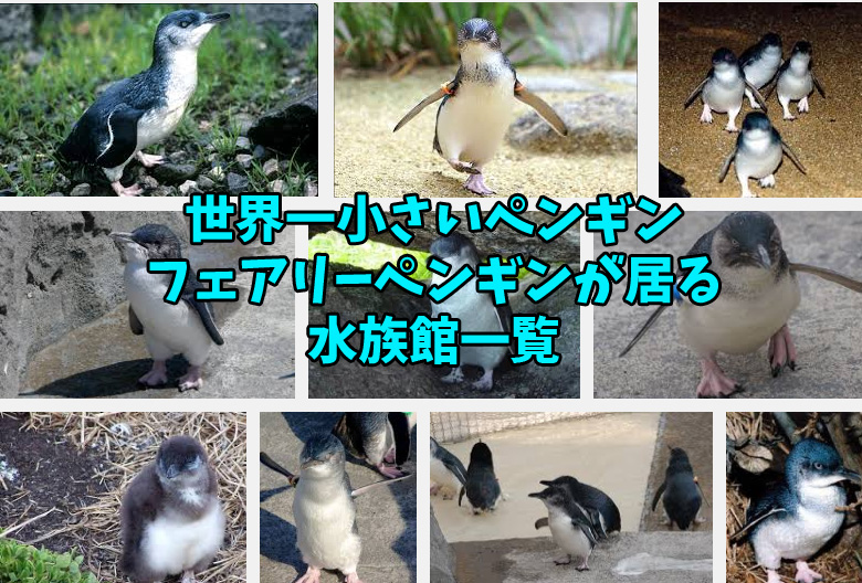 フェアリーペンギン 水族館