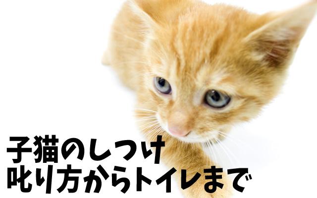 子猫の育て方 しつけ